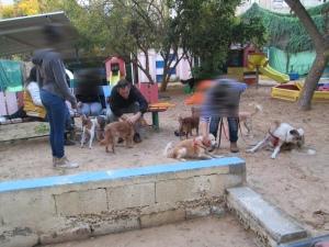 פעילות כלבים בראשון לציון